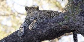 Discover the Mpumalanga Lowveld & Limpopo